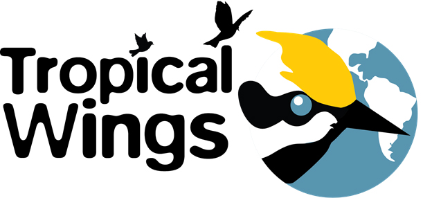 Tropical Wings